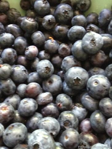 blueberries 004