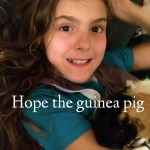 Farewell Hope The Guinea Pig #WordlessWednesday #Linky