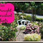5 Drought Resistant Plants