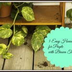 5 Easy Houseplants for People with Brown Thumbs
