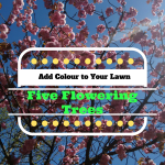 Five Flowering Trees – Put a Splash of Colour on Your Lawn