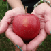 apple_pandowdy