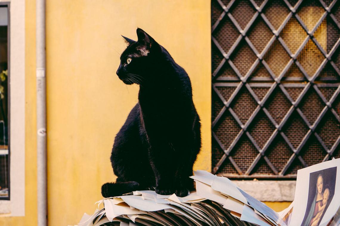 cat_adoption