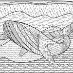 Whale Colouring Page Printable