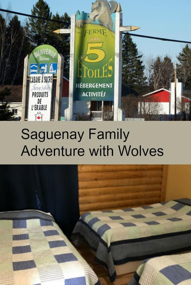 saguenay_wolf_encounter