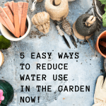 Five Easy Ways to Reduce Water Use in the Garden Now!