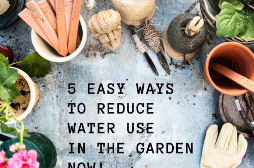 reduce_water_use_in_the_garden