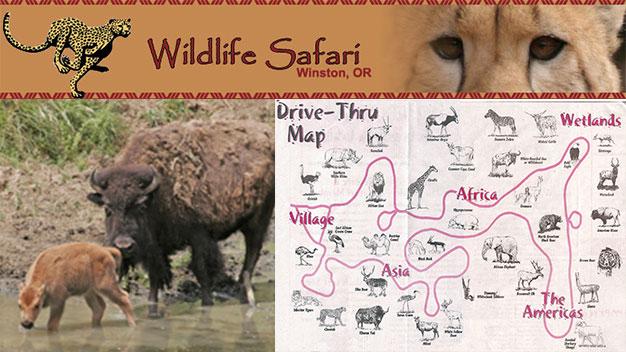 Half Off Tickets to Wildlife Safari Winston OR