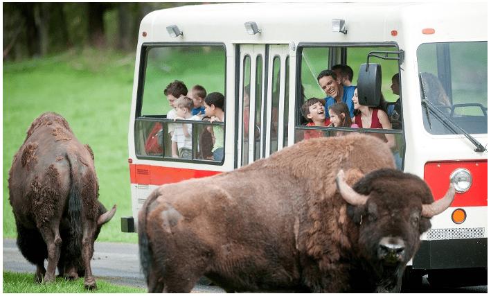 Northwest Trek Wildlife Park Discount Up To 25 OFF