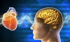 The Brain-Heart Connection