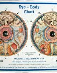 Dr bernard jensen iridology and its efficacy also       therapies rh thrivetherapies
