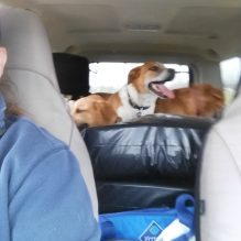 taking dogs to kennel (5)