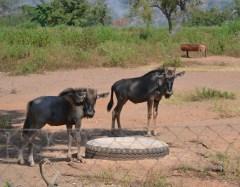 Nigeria zoo