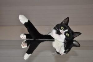 cat-566648_640