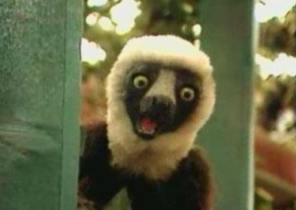 20+ Zoboomafoo Google Pictures and Ideas on STEM Education