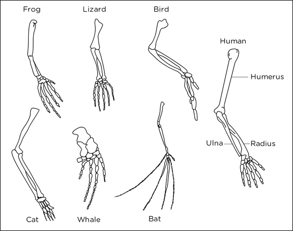 Bone fish white label dating