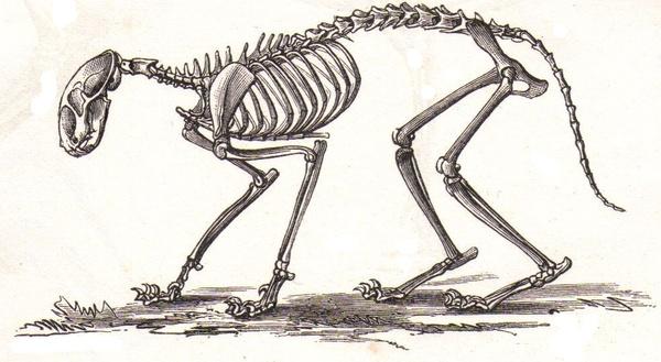 Diagram Of Bone With Labels Thunderbolt Kids