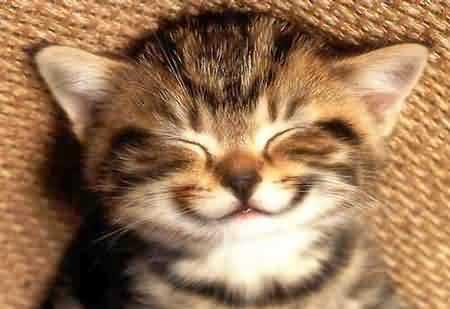 https://i0.wp.com/www.thundergroundcomics.com/wp-content/uploads/2009/09/happy-cat.jpg