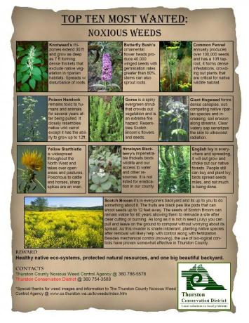 Top 10 Most Wanted Noxious Weeds in Thurston County