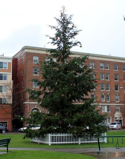 holiday spirit tree at sylvester park