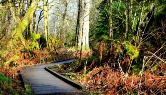 City of Olympia Washington Watershed Park (1)