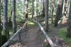 Skokomish Park Lake Cushman Washington (181)