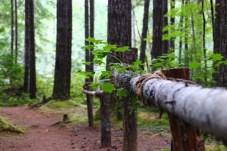 Skokomish Park Lake Cushman Washington (5)