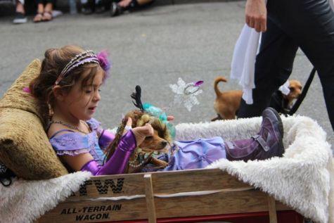 olympia pet parade 2013 - 41