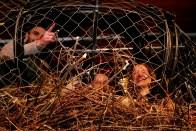 HOCM Adult Swim eagles nest-001