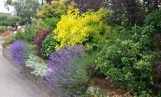 A beautiful yard can also be a safe yard - for people, pets and the Puget Sound.