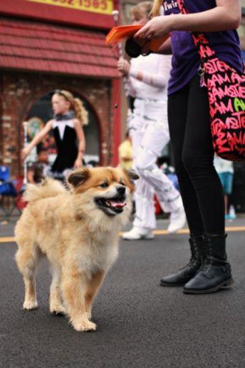 olympia pet parade