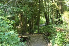 McLane Creek Nature Trail (10)