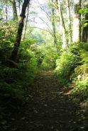 McLane Creek Nature Trail (6)