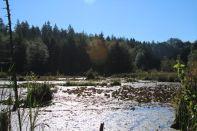 McLane Creek Nature Trail (9)