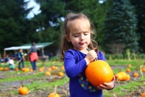 pumpkin Lattins Cider Mill Thurston County (205)