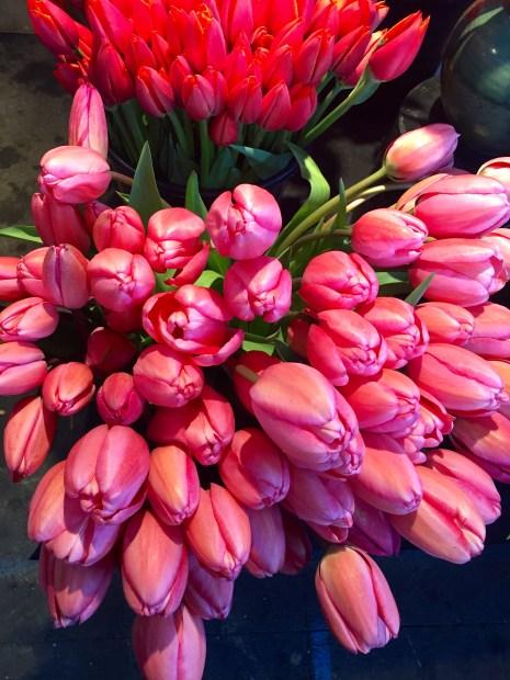 Olympia Farmers Market Tulips
