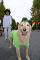 pet parade 1
