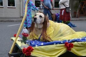 pet parade 2