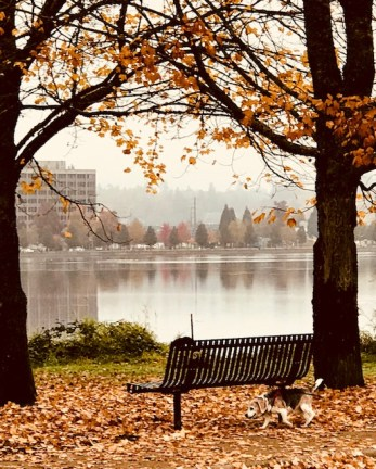 capitol lake Olympia