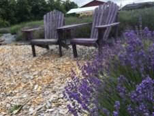 Evergreen Valley Lavender Farm 9