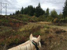 Scatter Creek Horse Trail 40