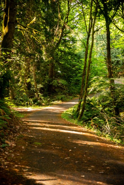 Frye Cove Park Thurston County Parks Paved Trail by Molly Walsh