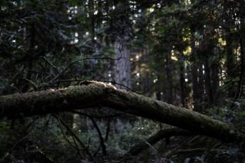 Hope Island Camping Washington State_37