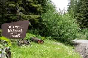 Olympia Motorcycle Ride to Wynoochee Dam Washington (10)