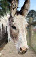 Photo courtesy: Black Dawg Farm and Sanctuary
