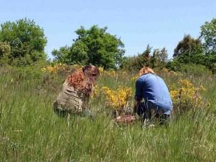 Herbal Courses, Workshops and Walks