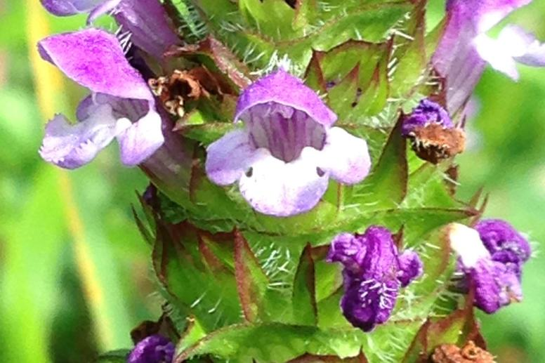 self heal aude southern france