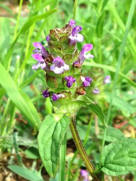 self heal aude france
