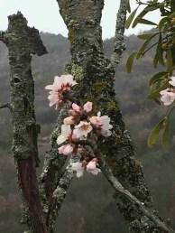 blossom beginnings ...