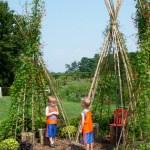 Kids Gardening:  Build a Bean Teepee